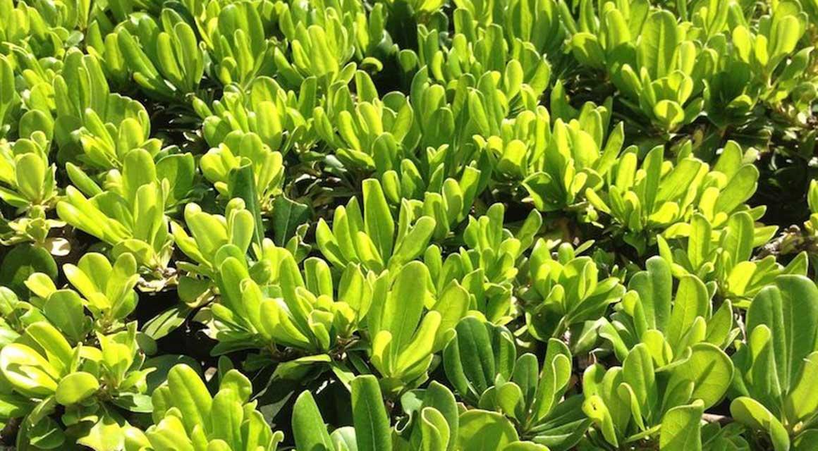 exotische Pflanzen Deutschland